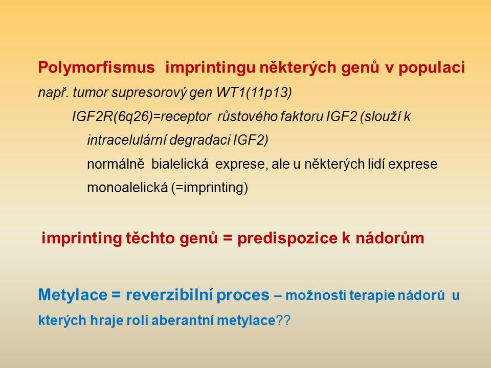 Polymorfismus imprintingu některých genů v populaci
