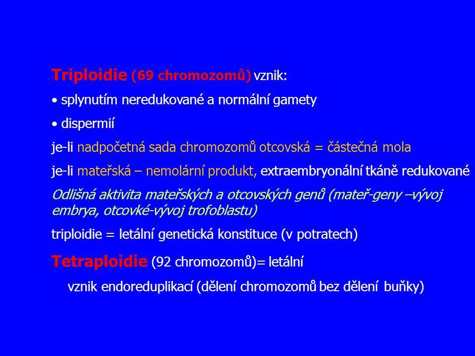 Triploidie (69 chromozomů) vznik: