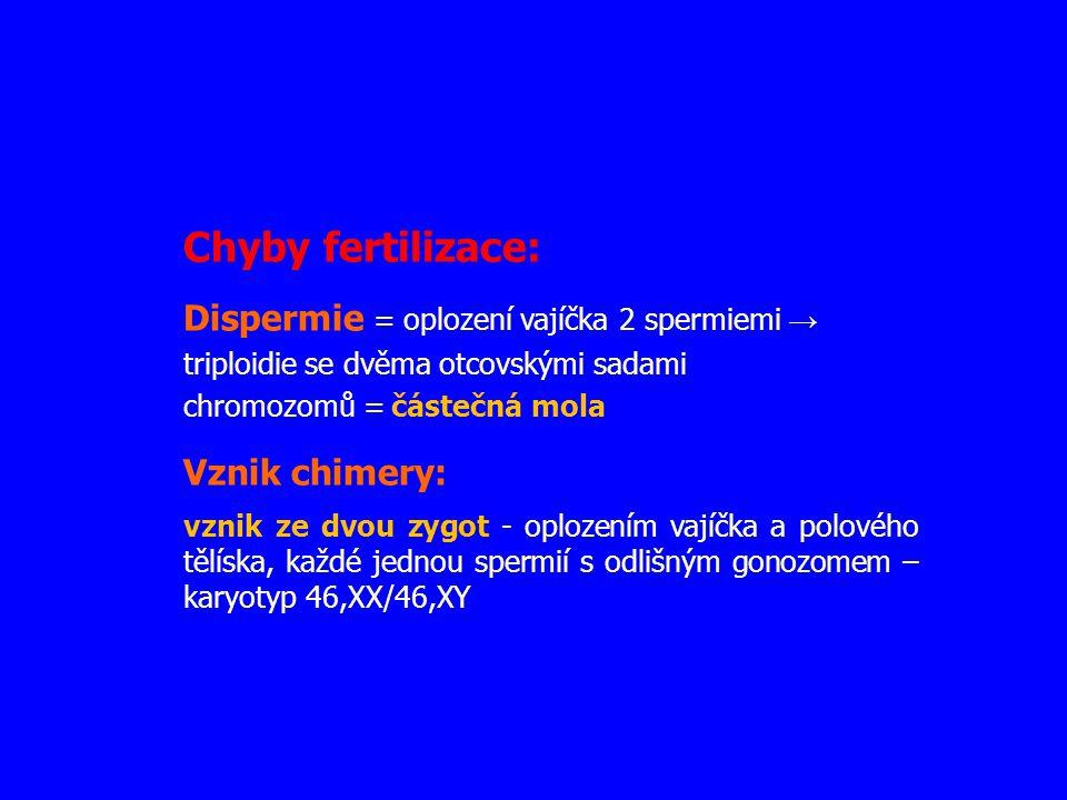 Chyby fertilizace: Dispermie = oplození vajíčka 2 spermiemi → triploidie se dvěma otcovskými sadami chromozomů = částečná mola.