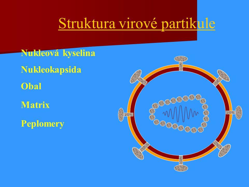 Struktura virové partikule