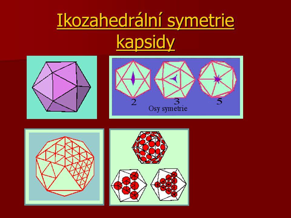 Ikozahedrální symetrie kapsidy