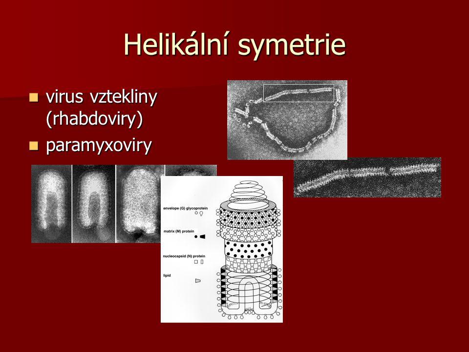 Helikální symetrie virus vztekliny (rhabdoviry) paramyxoviry