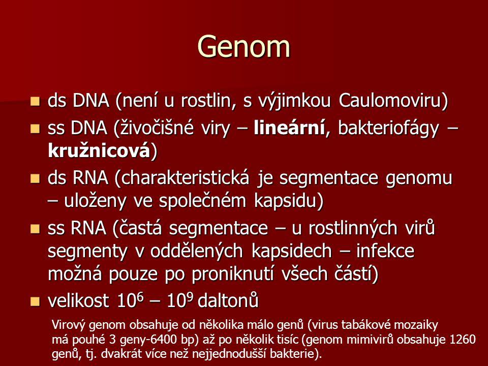 Genom ds DNA (není u rostlin, s výjimkou Caulomoviru)