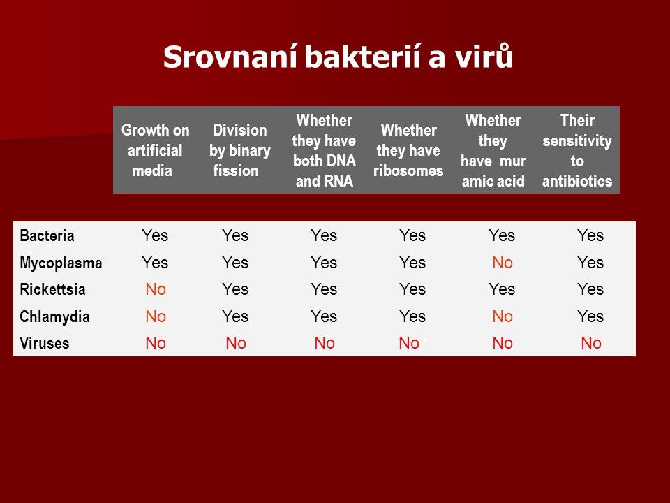 Srovnaní bakterií a virů