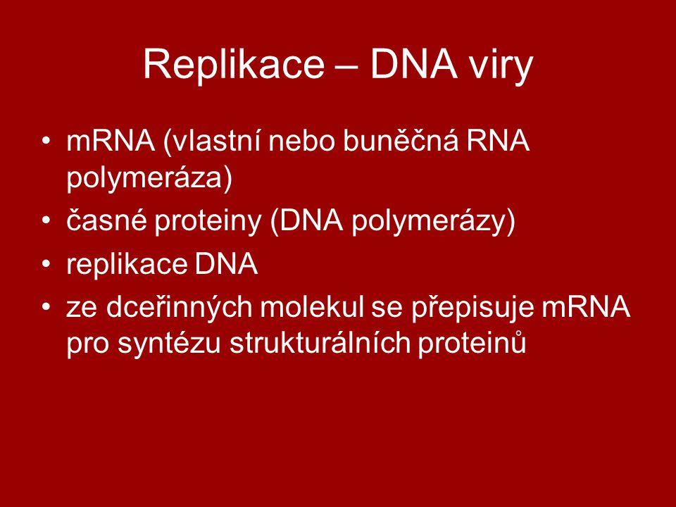 Replikace – DNA viry mRNA (vlastní nebo buněčná RNA polymeráza)