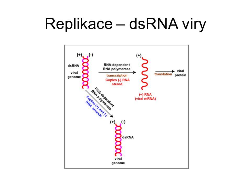 Replikace – dsRNA viry