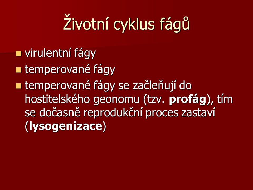 Životní cyklus fágů virulentní fágy temperované fágy