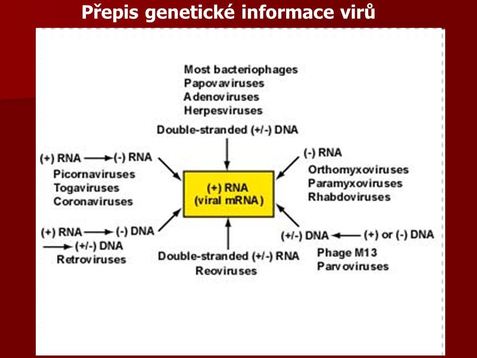 Přepis genetické informace virů