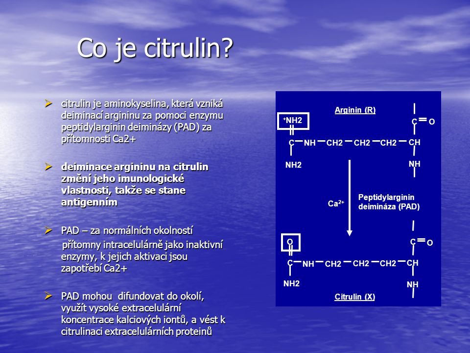 Co je citrulin C. CH2. CH. NH. +NH2. NH2. O. Arginin (R) Citrulin (X) Peptidylarginin. deimináza (PAD)
