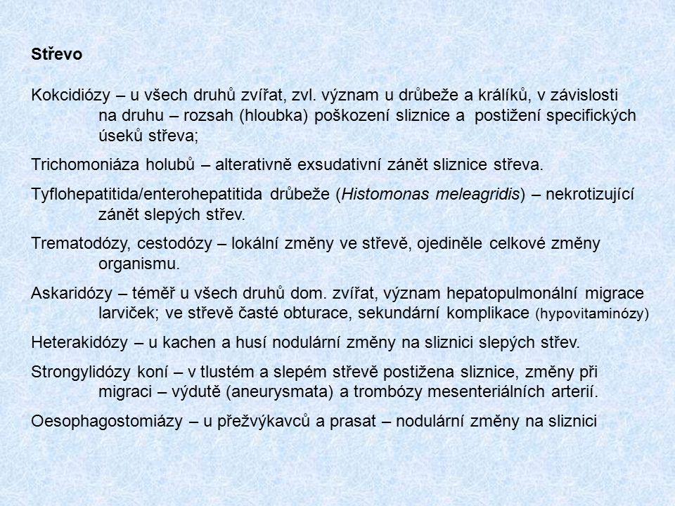 Střevo Kokcidiózy – u všech druhů zvířat, zvl. význam u drůbeže a králíků, v závislosti.