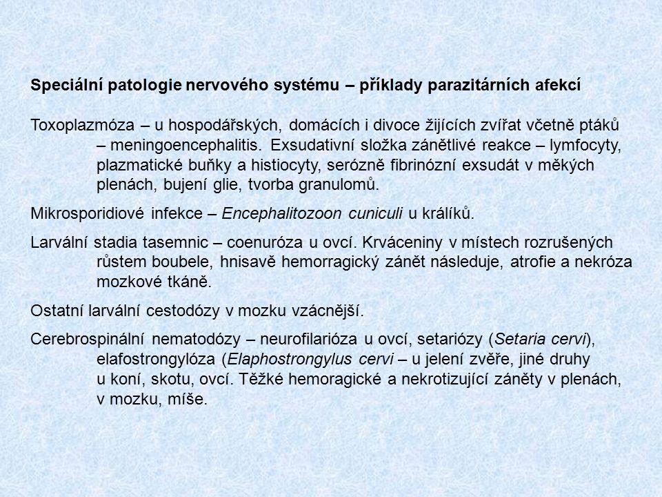 Speciální patologie nervového systému – příklady parazitárních afekcí