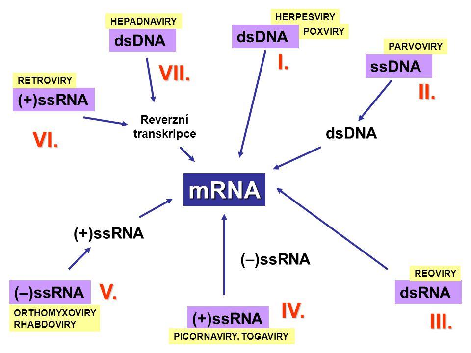 mRNA I. VII. II. VI. V. IV. III. dsDNA dsDNA ssDNA dsDNA (+)ssRNA