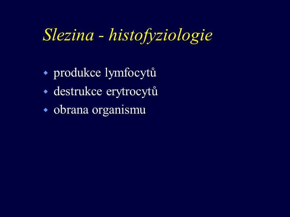 Slezina - histofyziologie