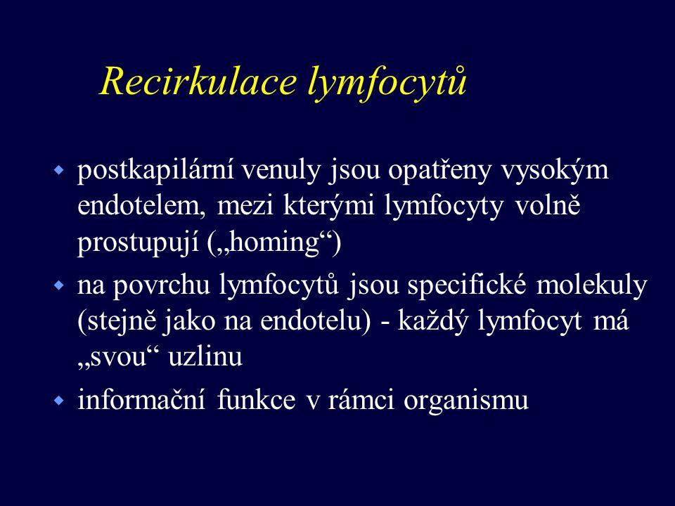 Recirkulace lymfocytů