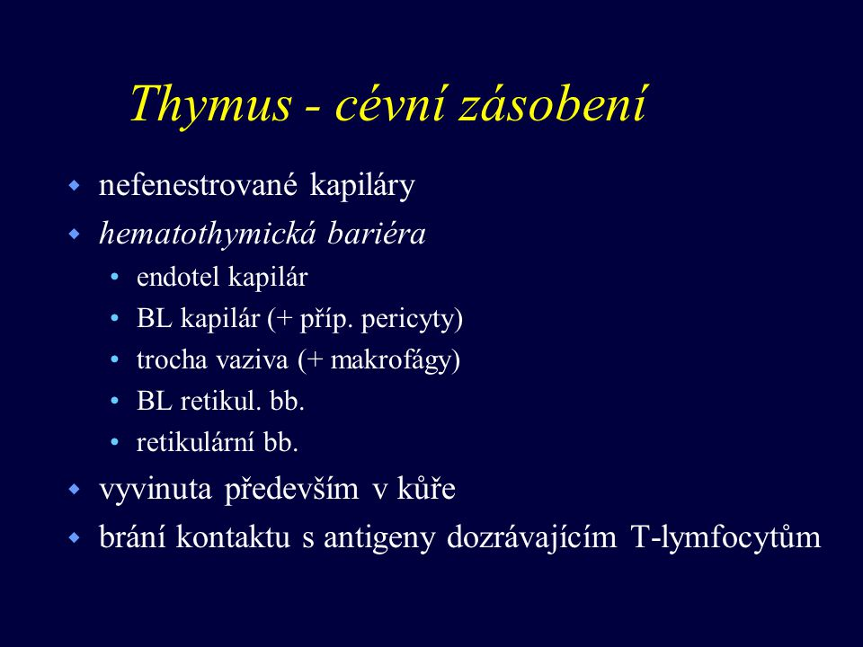 Thymus - cévní zásobení