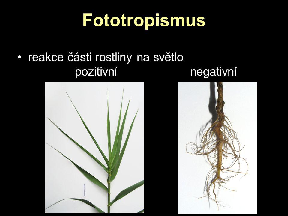 Fototropismus reakce části rostliny na světlo pozitivní negativní