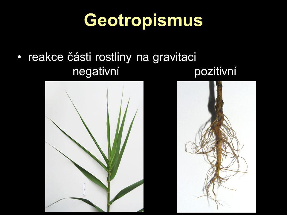 Geotropismus reakce části rostliny na gravitaci negativní pozitivní