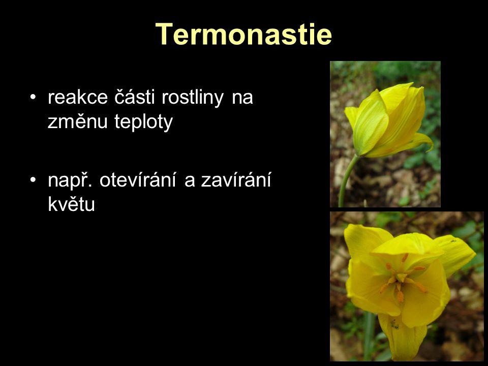 Termonastie reakce části rostliny na změnu teploty