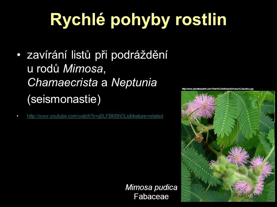 Rychlé pohyby rostlin zavírání listů při podráždění u rodů Mimosa, Chamaecrista a Neptunia. (seismonastie)