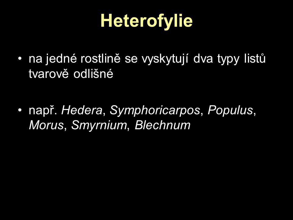 Heterofylie na jedné rostlině se vyskytují dva typy listů tvarově odlišné.