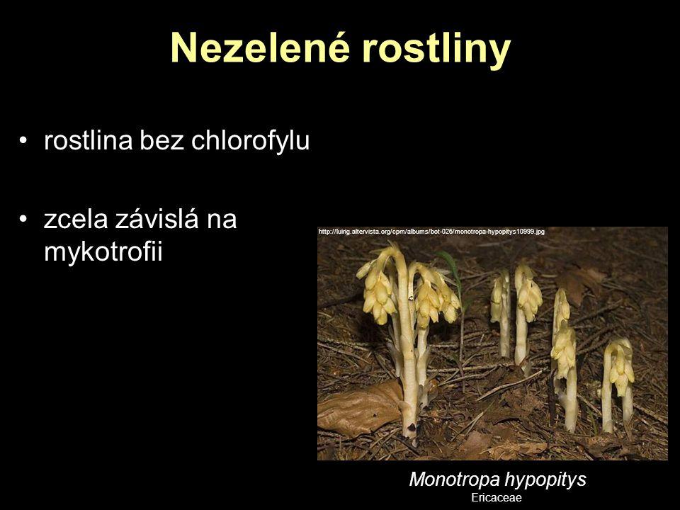 Nezelené rostliny rostlina bez chlorofylu zcela závislá na mykotrofii