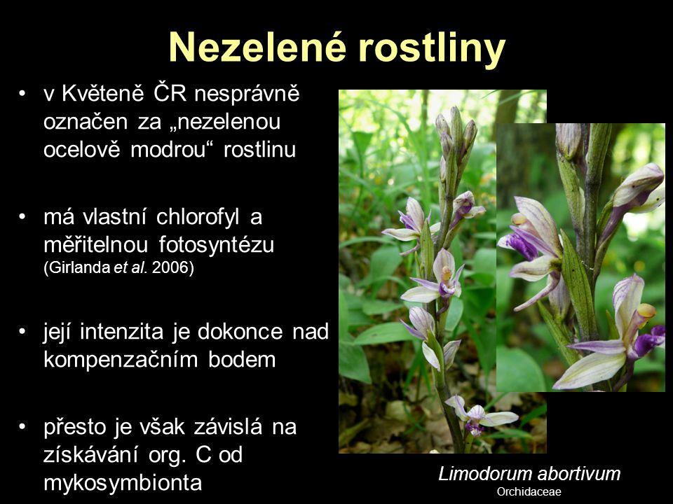 """Nezelené rostliny v Květeně ČR nesprávně označen za """"nezelenou ocelově modrou rostlinu."""