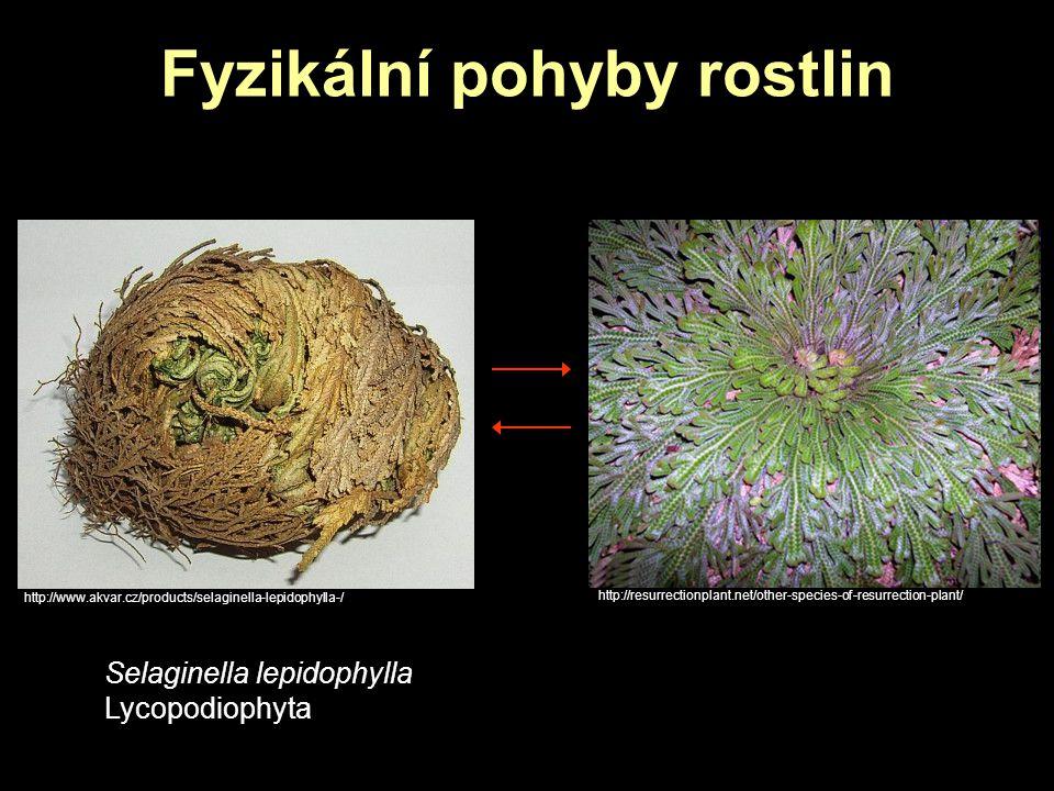 Fyzikální pohyby rostlin