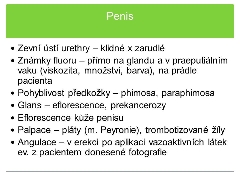 Penis Zevní ústí urethry – klidné x zarudlé