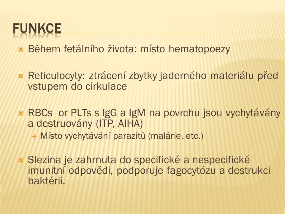 Funkce Během fetálního života: místo hematopoezy