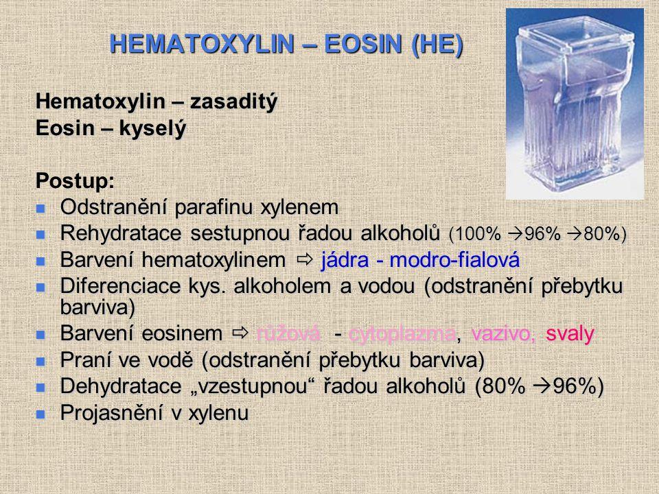HEMATOXYLIN – EOSIN (HE)