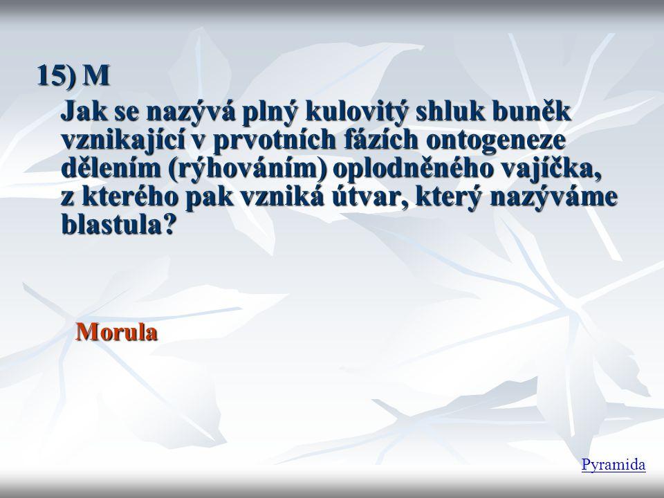 15) M