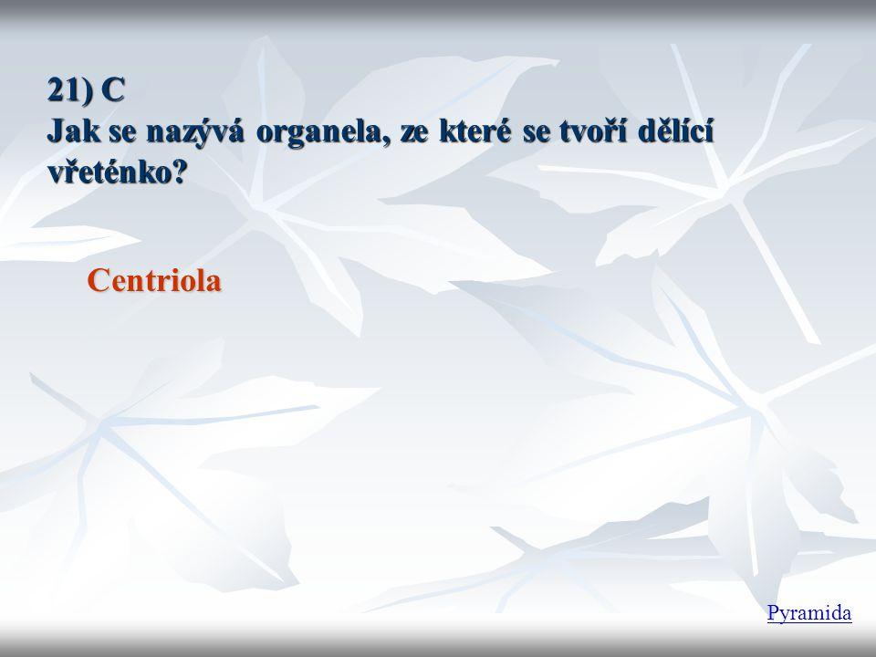 21) C Jak se nazývá organela, ze které se tvoří dělící vřeténko