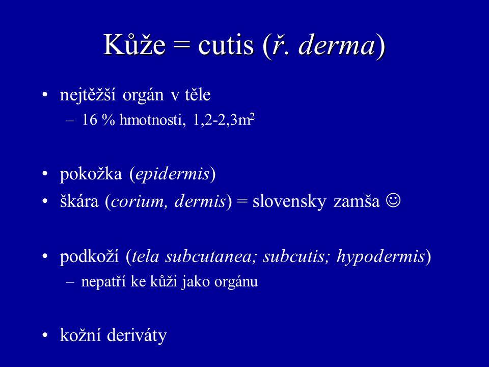 Kůže = cutis (ř. derma) nejtěžší orgán v těle pokožka (epidermis)