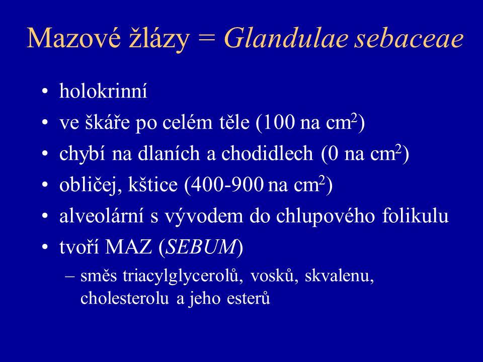 Mazové žlázy = Glandulae sebaceae