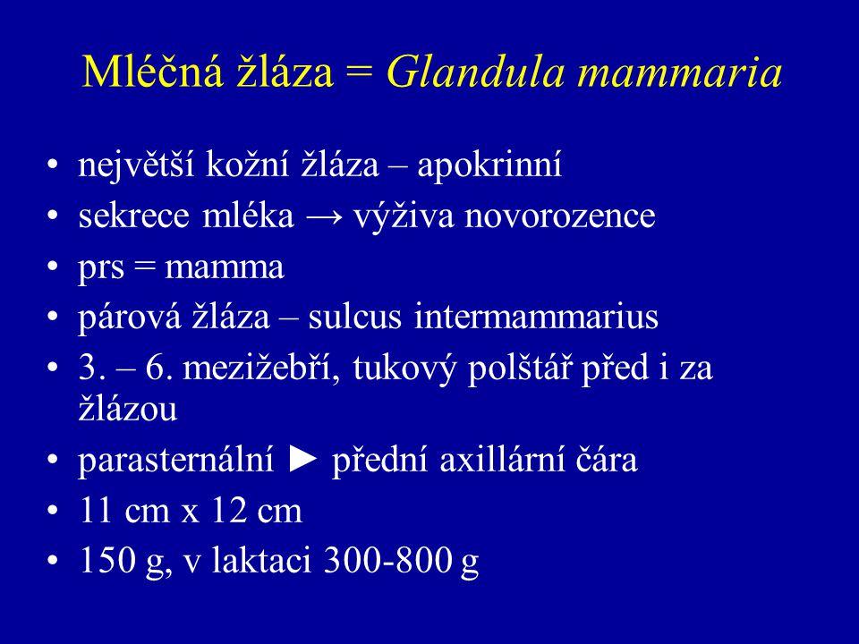 Mléčná žláza = Glandula mammaria