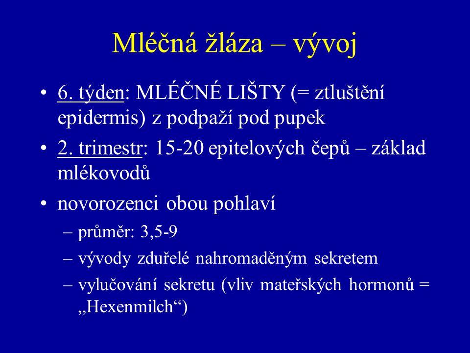 Mléčná žláza – vývoj 6. týden: MLÉČNÉ LIŠTY (= ztluštění epidermis) z podpaží pod pupek. 2. trimestr: 15-20 epitelových čepů – základ mlékovodů.