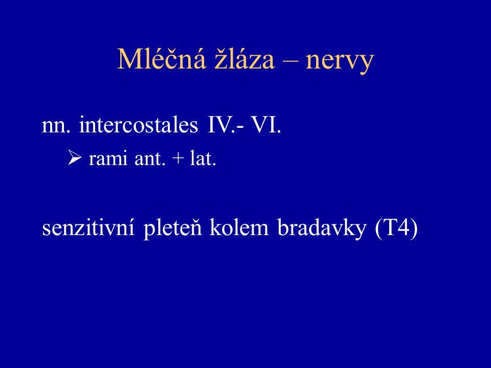 Mléčná žláza – nervy nn. intercostales IV.- VI.
