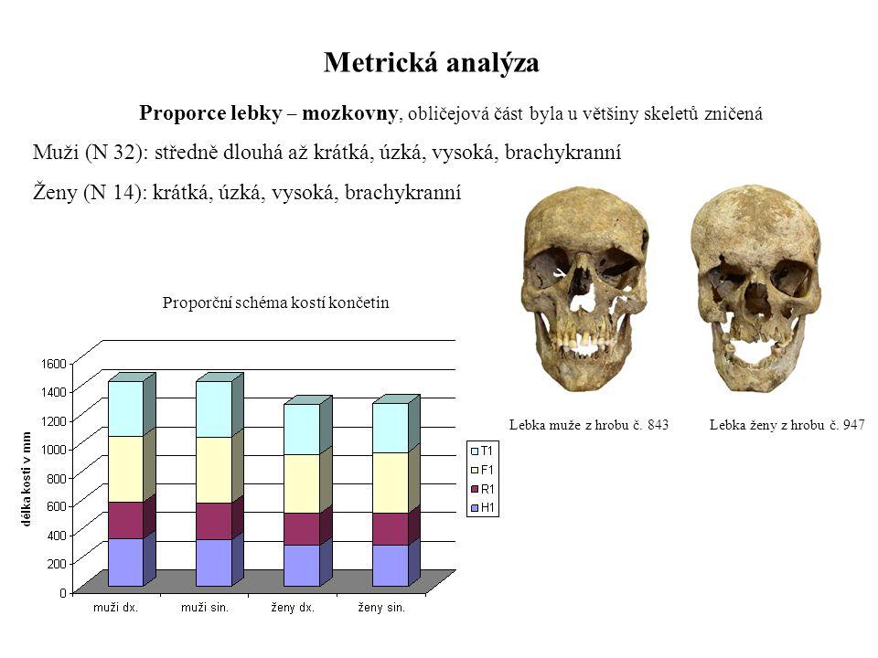 Proporční schéma kostí končetin
