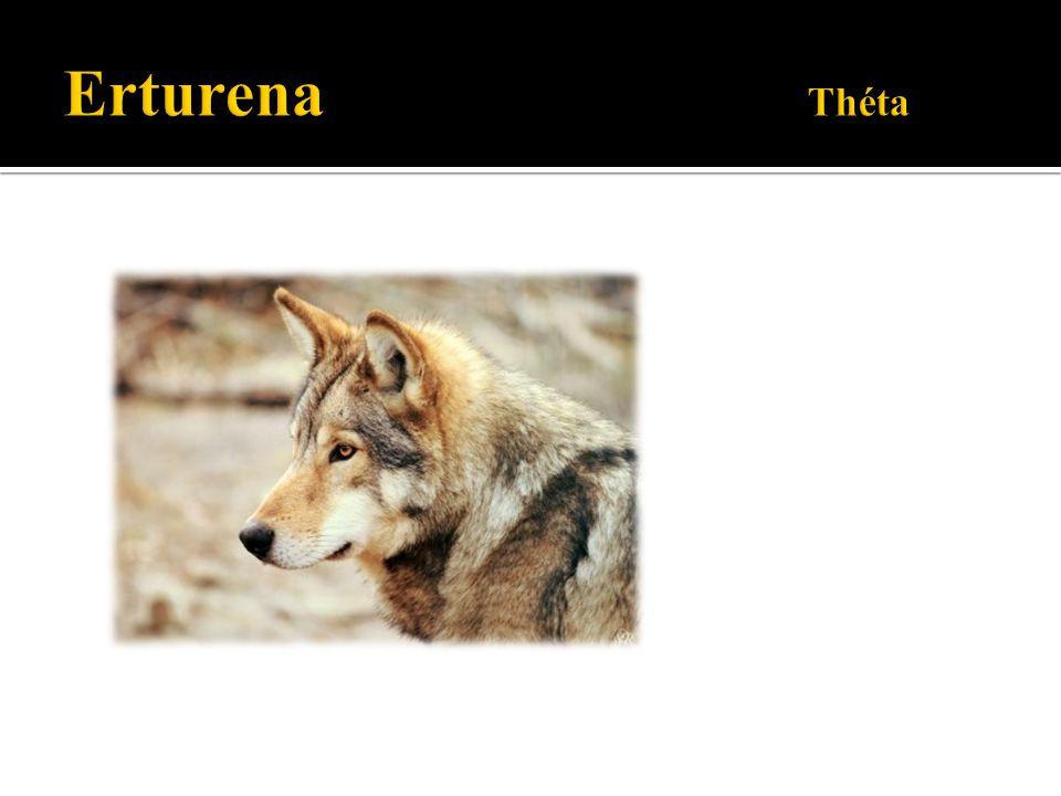 Erturena Théta