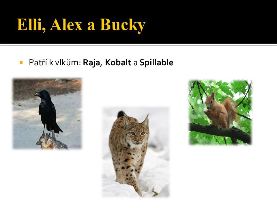 Elli, Alex a Bucky Patří k vlkům: Raja, Kobalt a Spillable