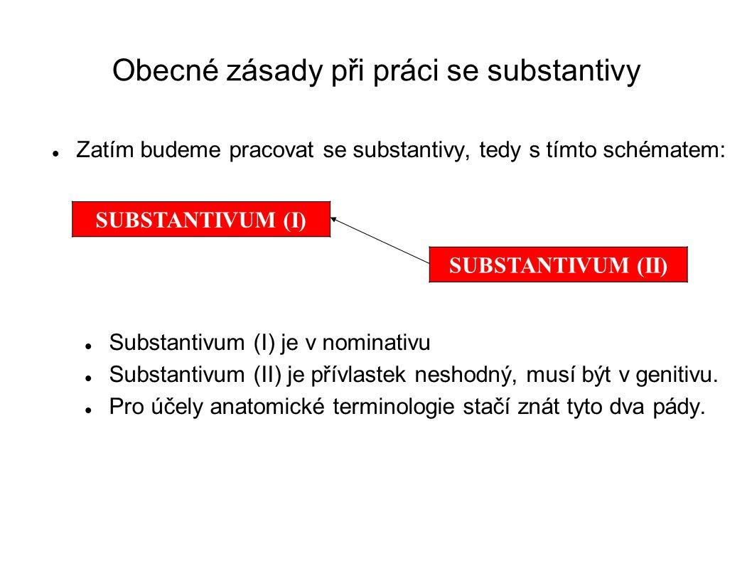 Obecné zásady při práci se substantivy
