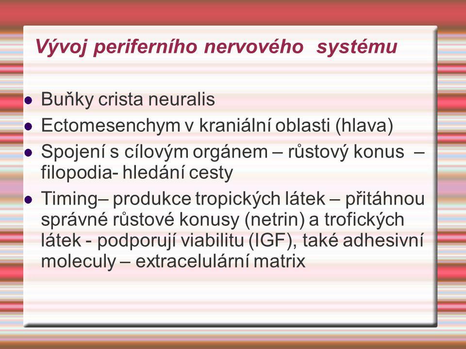 Vývoj periferního nervového systému