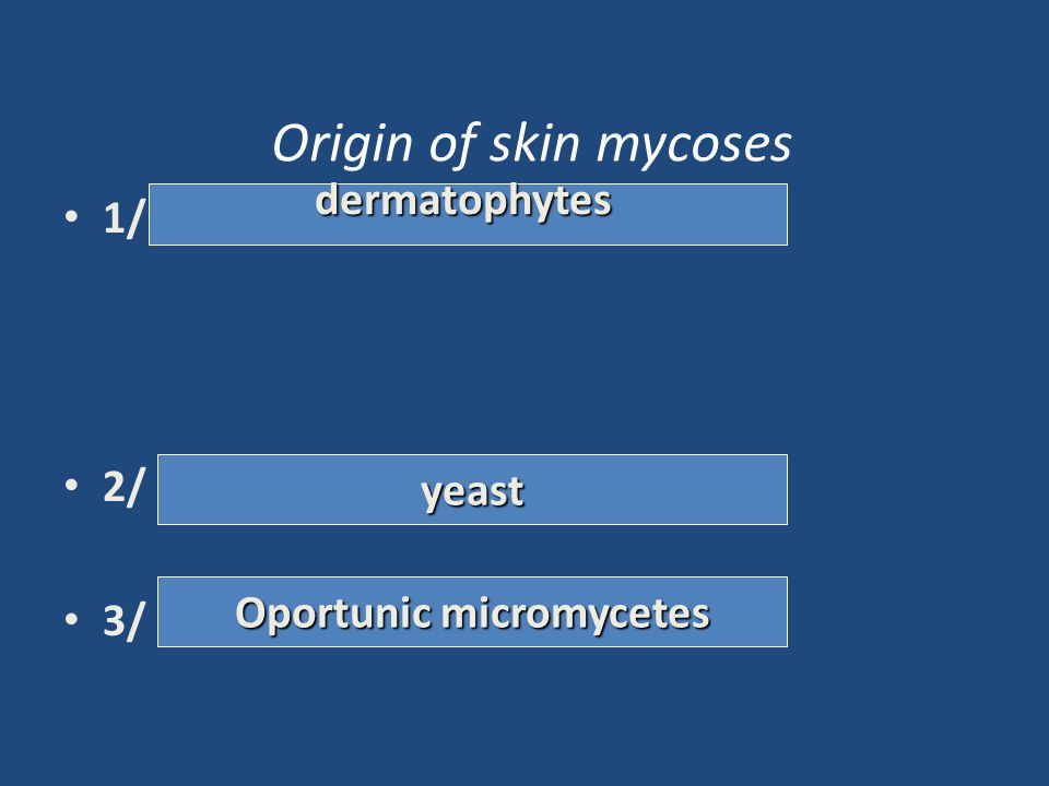Oportunic micromycetes