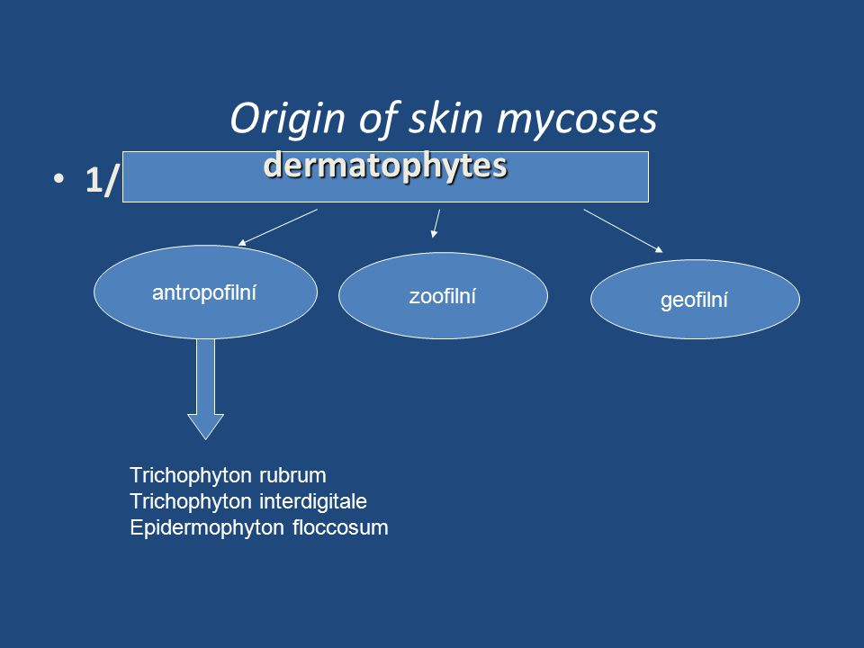 Origin of skin mycoses dermatophytes 1/ antropofilní zoofilní geofilní
