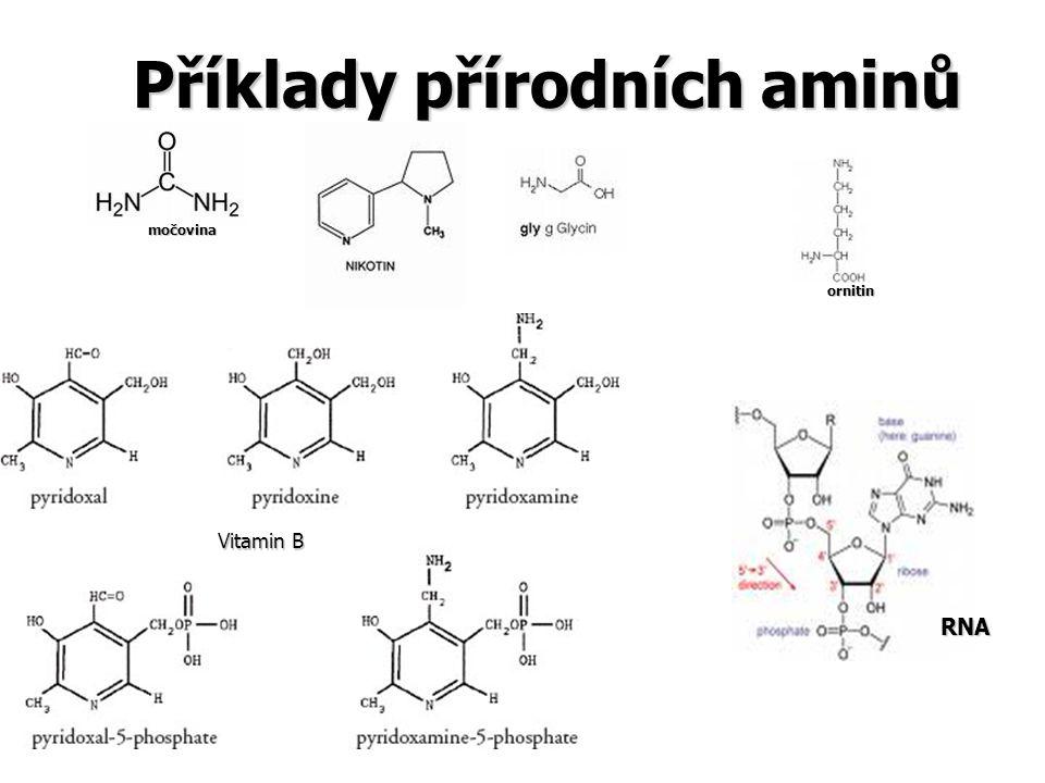Příklady přírodních aminů