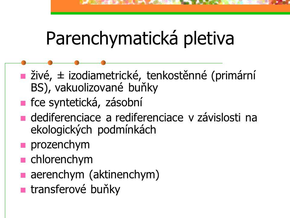 Parenchymatická pletiva