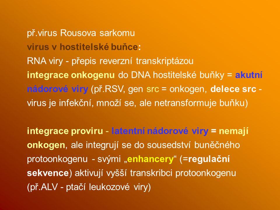 př.virus Rousova sarkomu