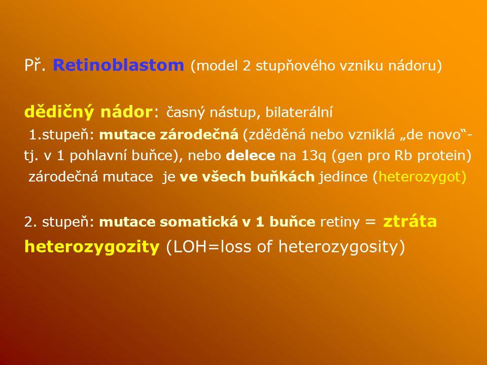Př. Retinoblastom (model 2 stupňového vzniku nádoru)