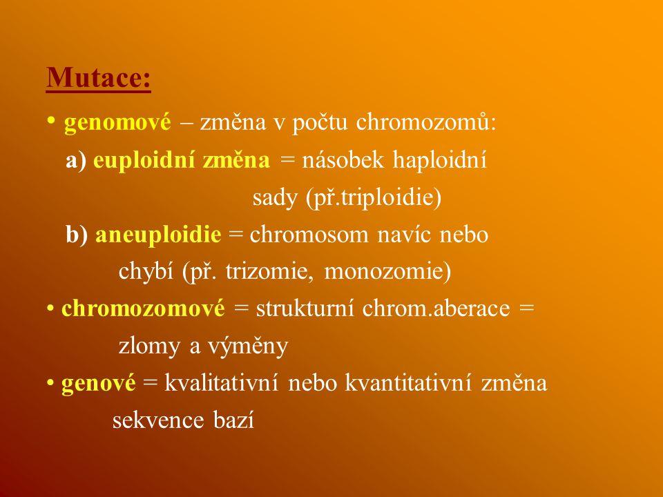 genomové – změna v počtu chromozomů: