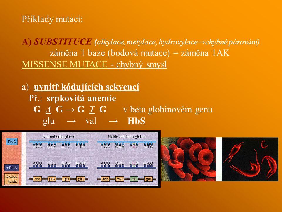 Příklady mutací: A) SUBSTITUCE (alkylace, metylace, hydroxylace→chybné párování) záměna 1 baze (bodová mutace) = záměna 1AK.